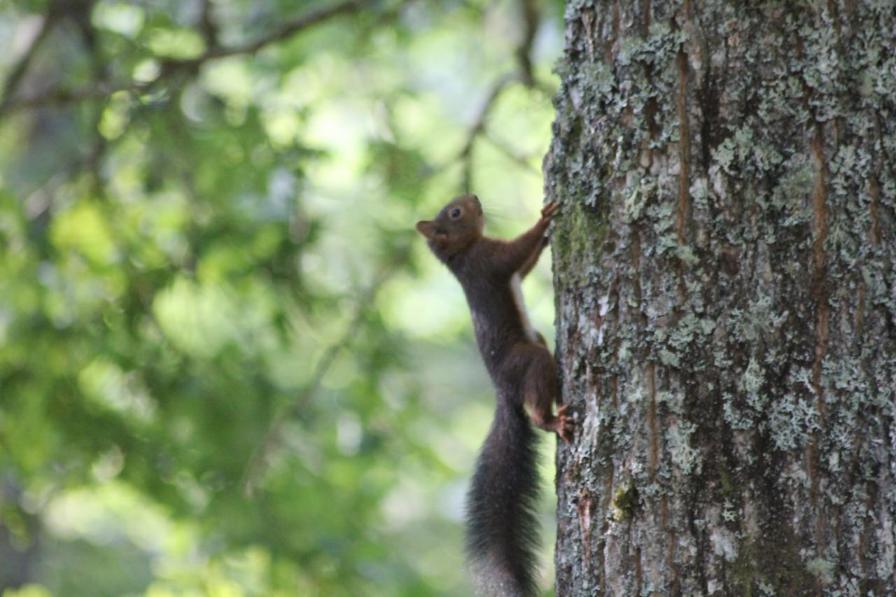 écureuil au matin