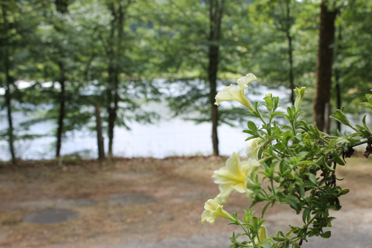 Vue du camping sur le lac