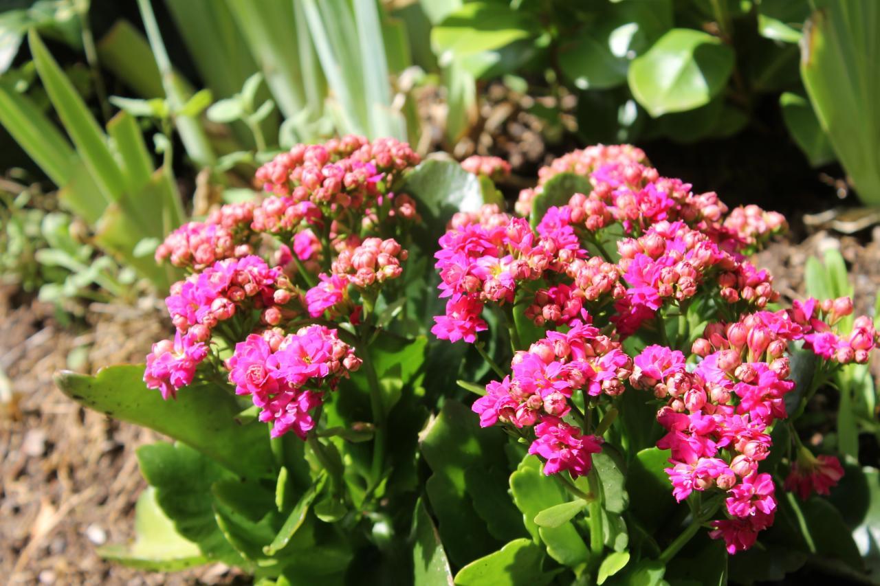 Fleurs sur emplacement